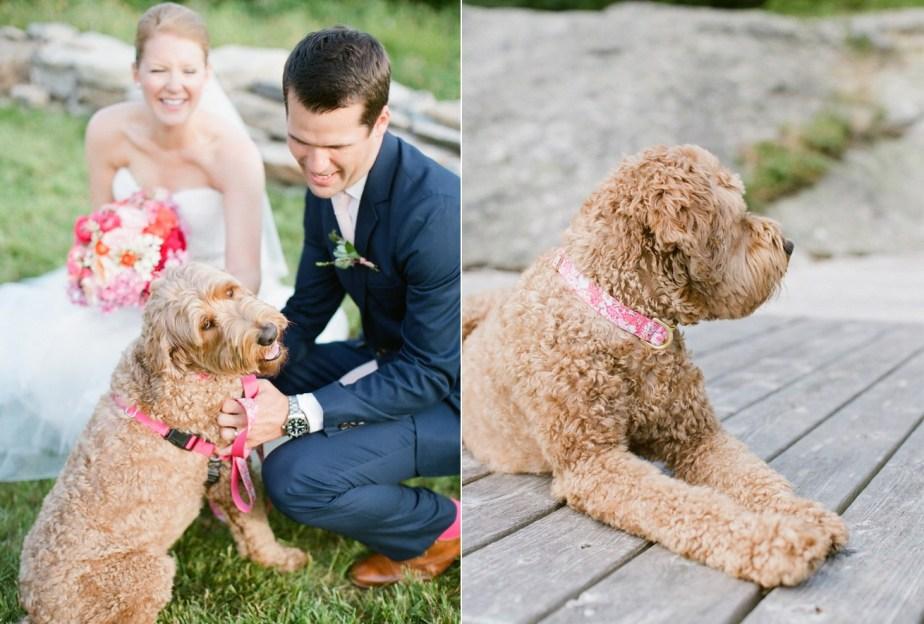 Bode the Wedding Dog