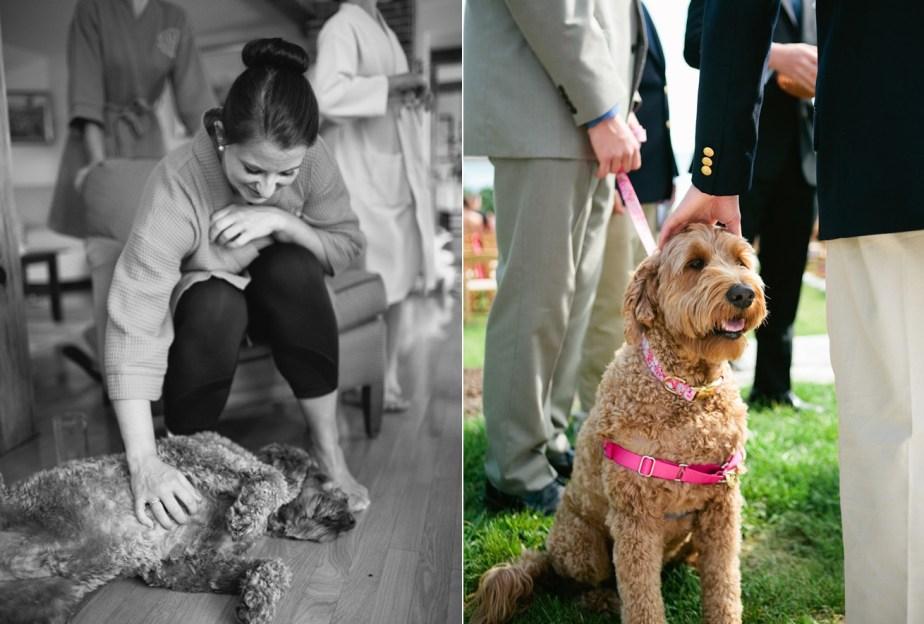 Dogs at Wedding Photos