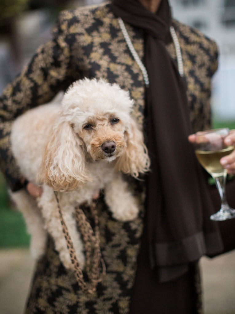 Dogs at Weddings